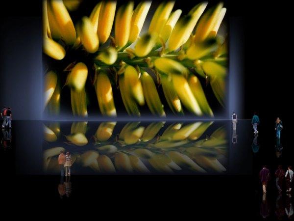 sintagmas-vegetales1